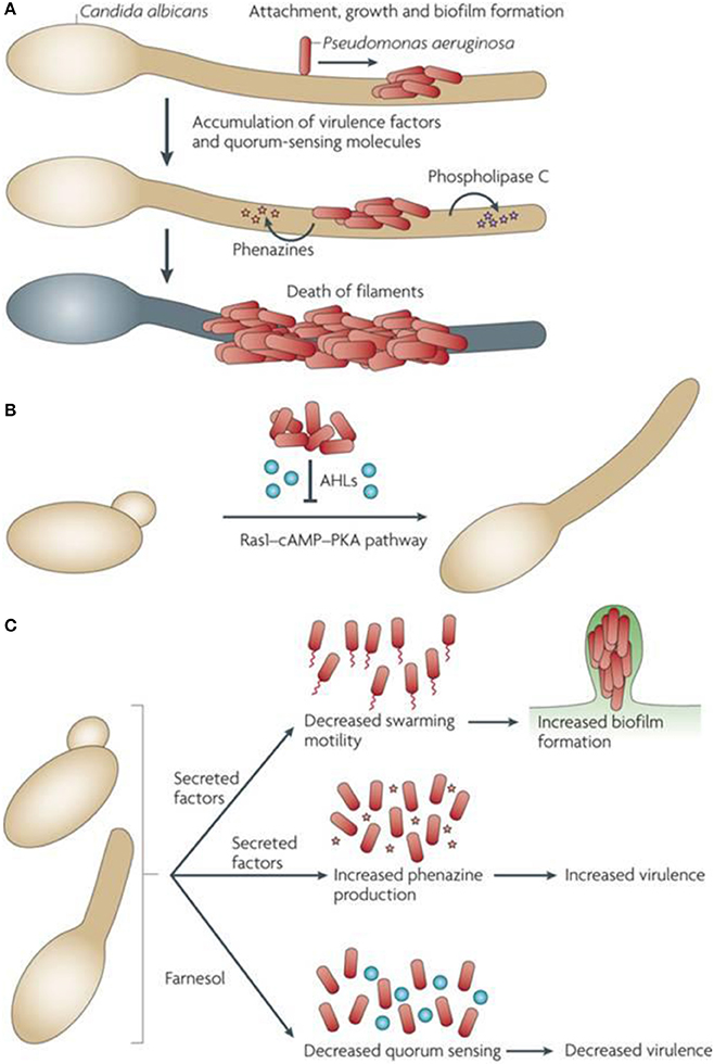 Frontiers   Current Trends and Potential Applications of Microbial