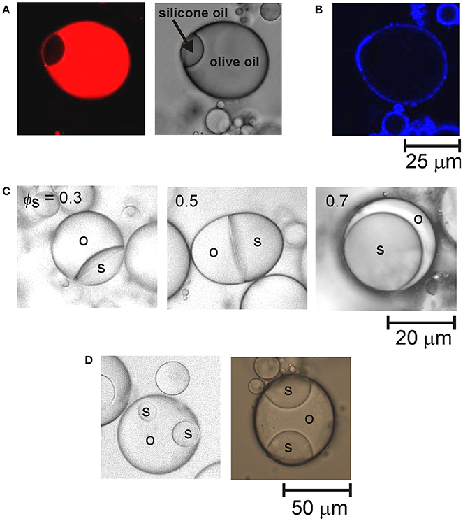 Frontiers | Droplet Fusion in Oil-in-Water Pickering Emulsions