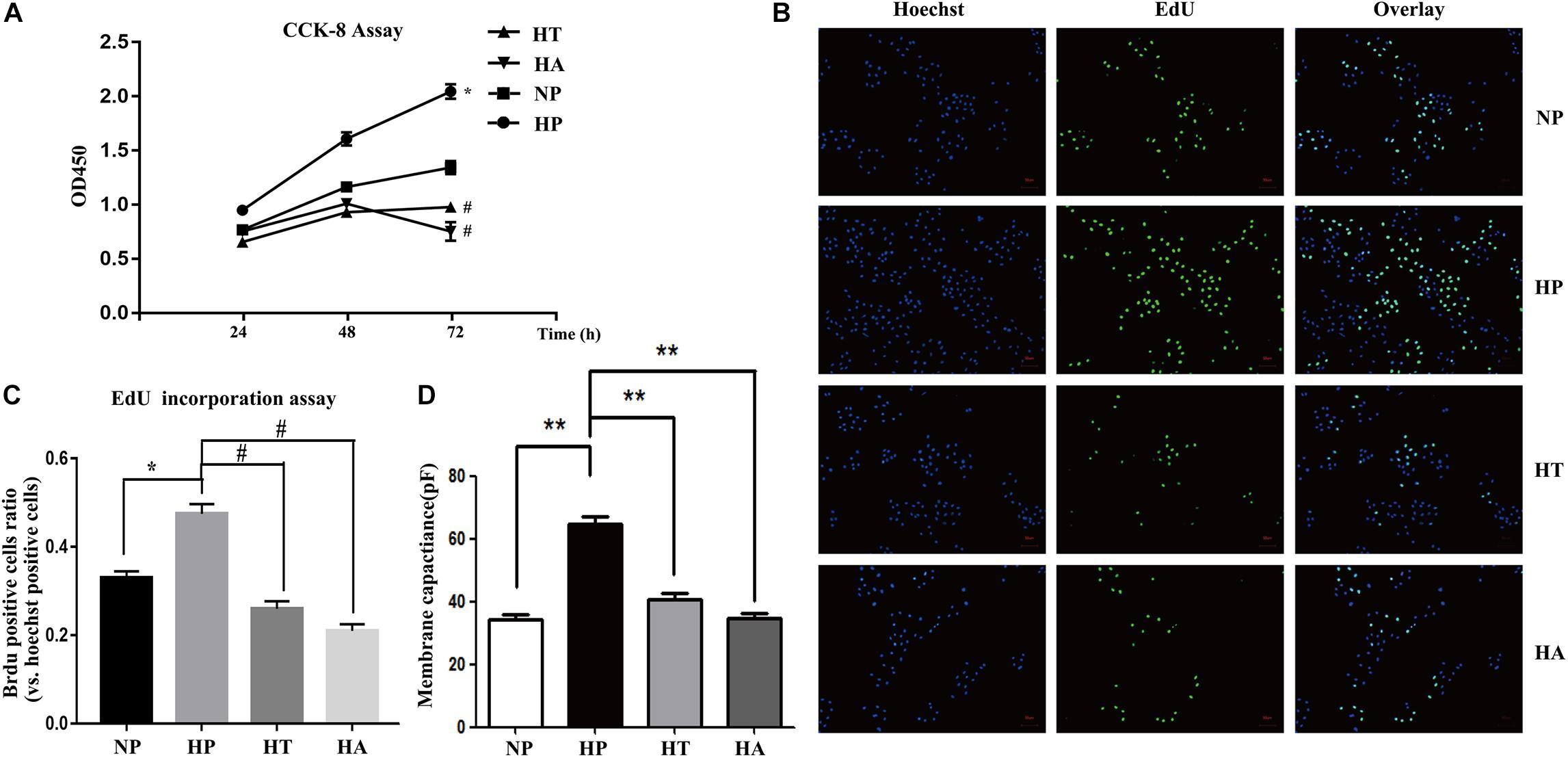 Frontiers | Vildagliptin Reduces Stenosis of Injured Carotid Artery