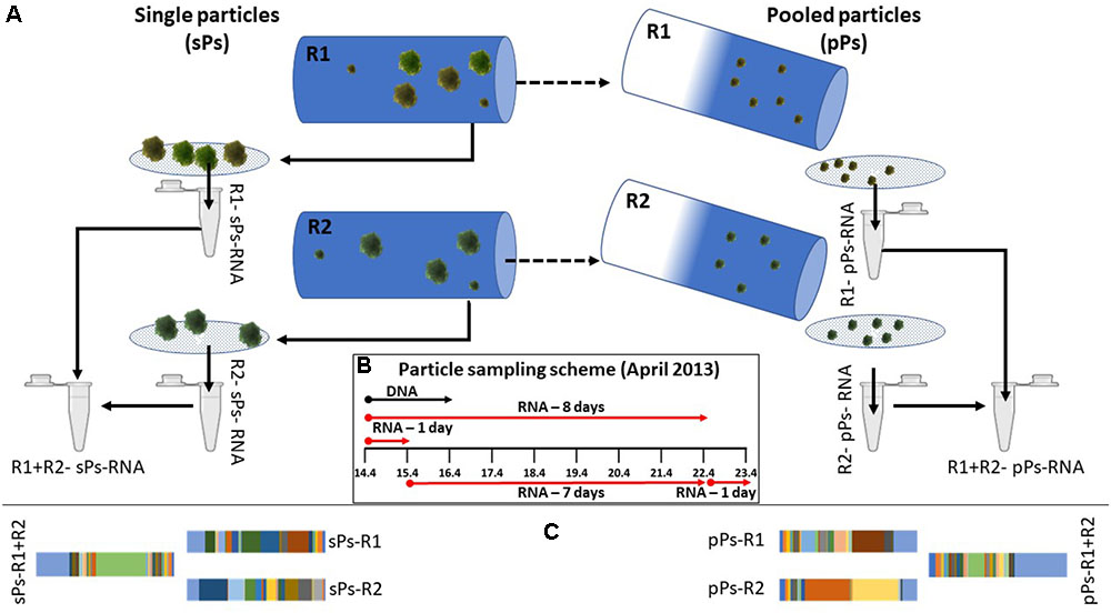 Frontiers Organic Particles Heterogeneous Hubs For Microbial Cool Section 174 Patterns Of Evolution