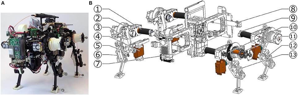 Frontiers   Oncilla Robot: A Versatile Open-Source Quadruped