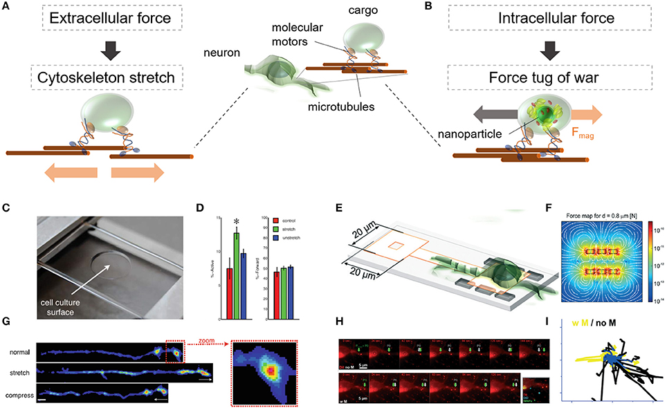 Frontiers | Force-Mediating Magnetic Nanoparticles to