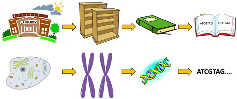 Figure 1 - You can imagine each cell as a library.