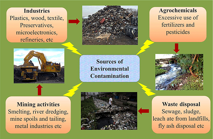 Frontiers Understanding And Designing The Strategies For The Microbe Mediated Remediation Of Environmental Contaminants Using Omics Approaches Microbiology