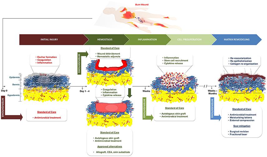 Frontiers Advancements In Regenerative Strategies Through The