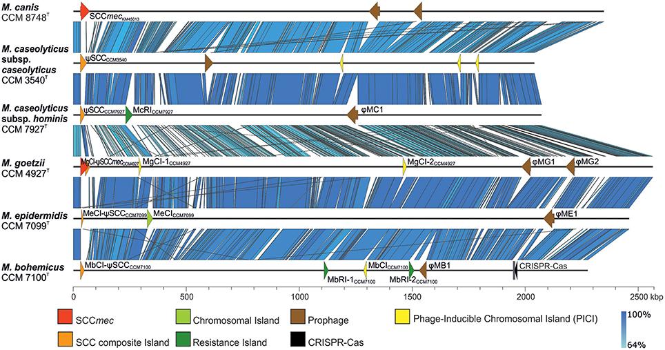 Frontiers | Description and Comparative Genomics of Macrococcus