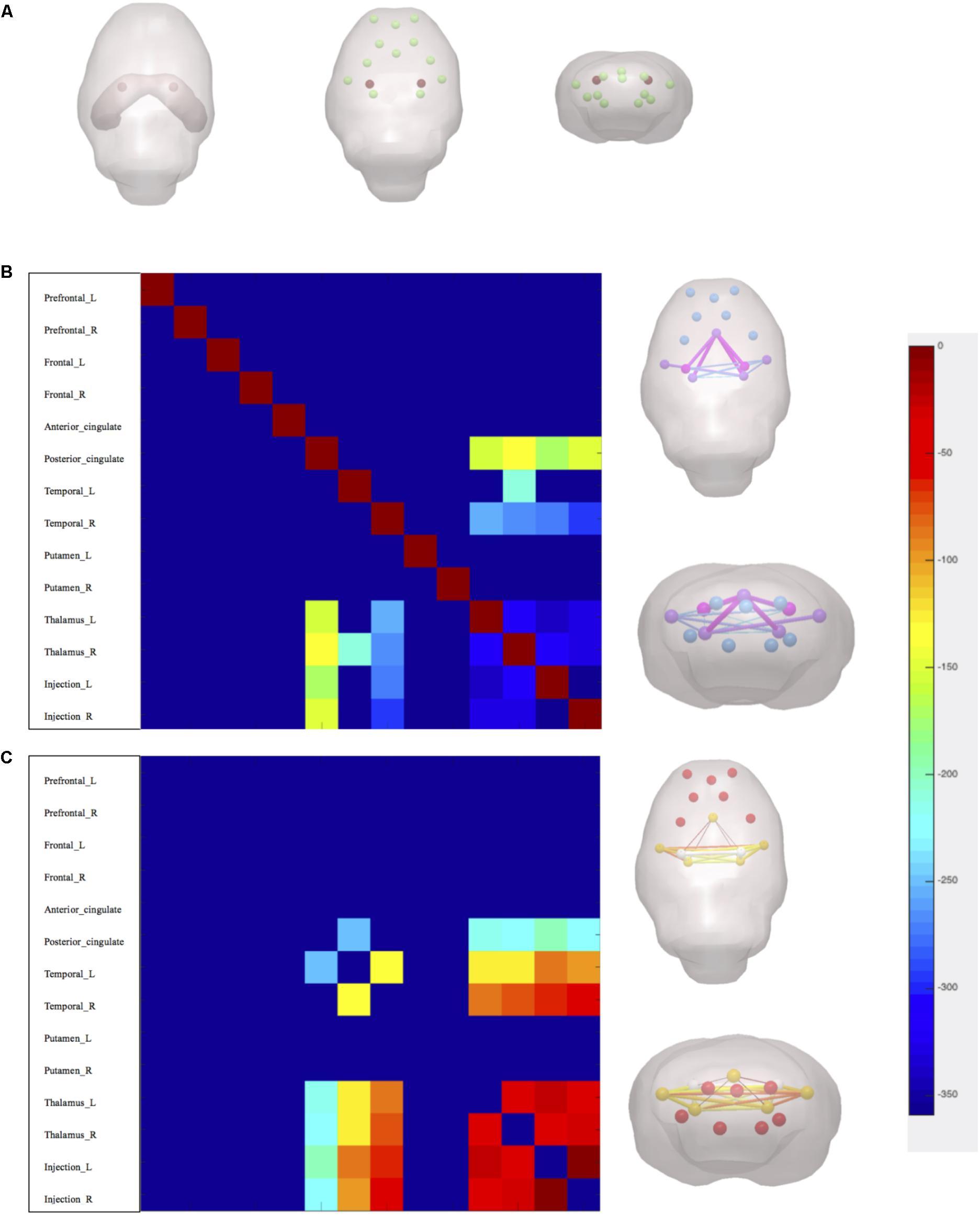 Frontiers | Total Salvianolic Acid Balances Brain ...