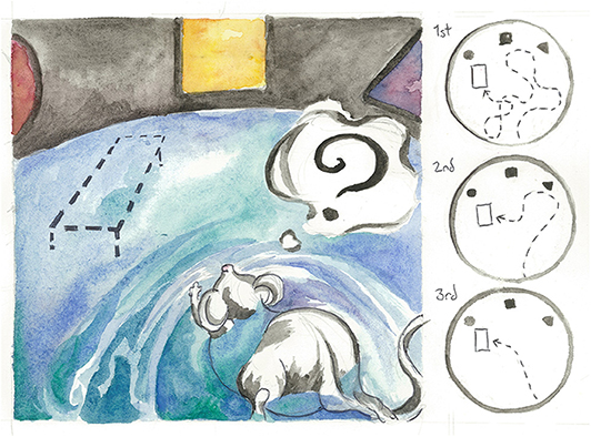 Figure 3 - A mouse practices the Morris water maze, a test for spatial reasoning and memory.