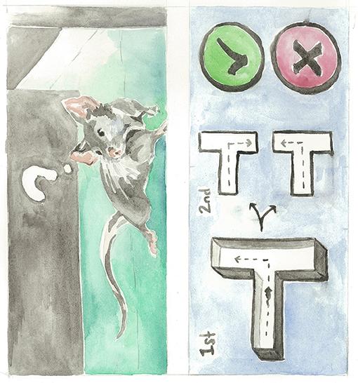 Figure 4 - A mouse explores the T-maze.