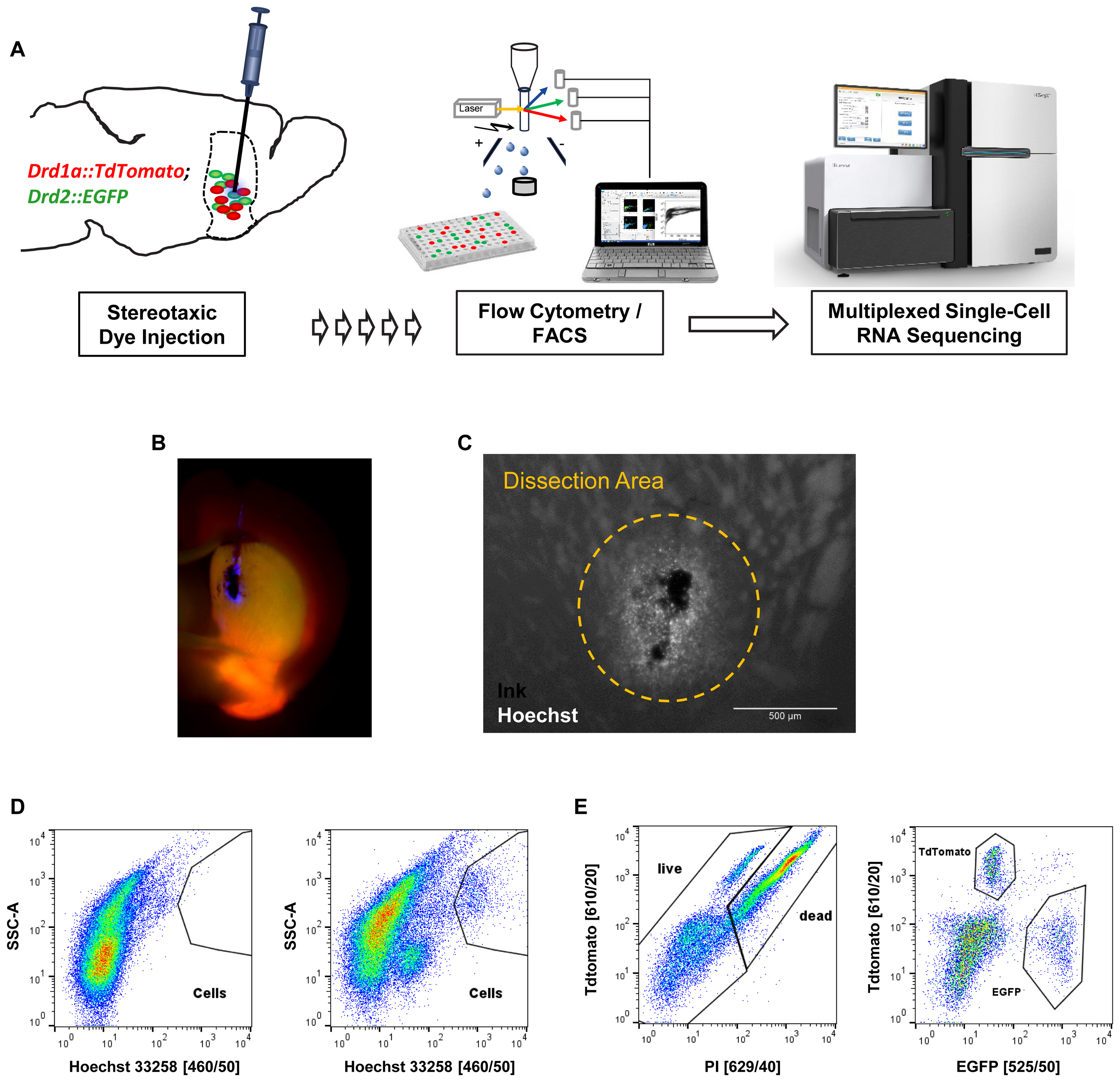 Single Cell Rna Sequencing Scrna Seq Of Cells: A Guide To Single - Cell Transcriptomics In