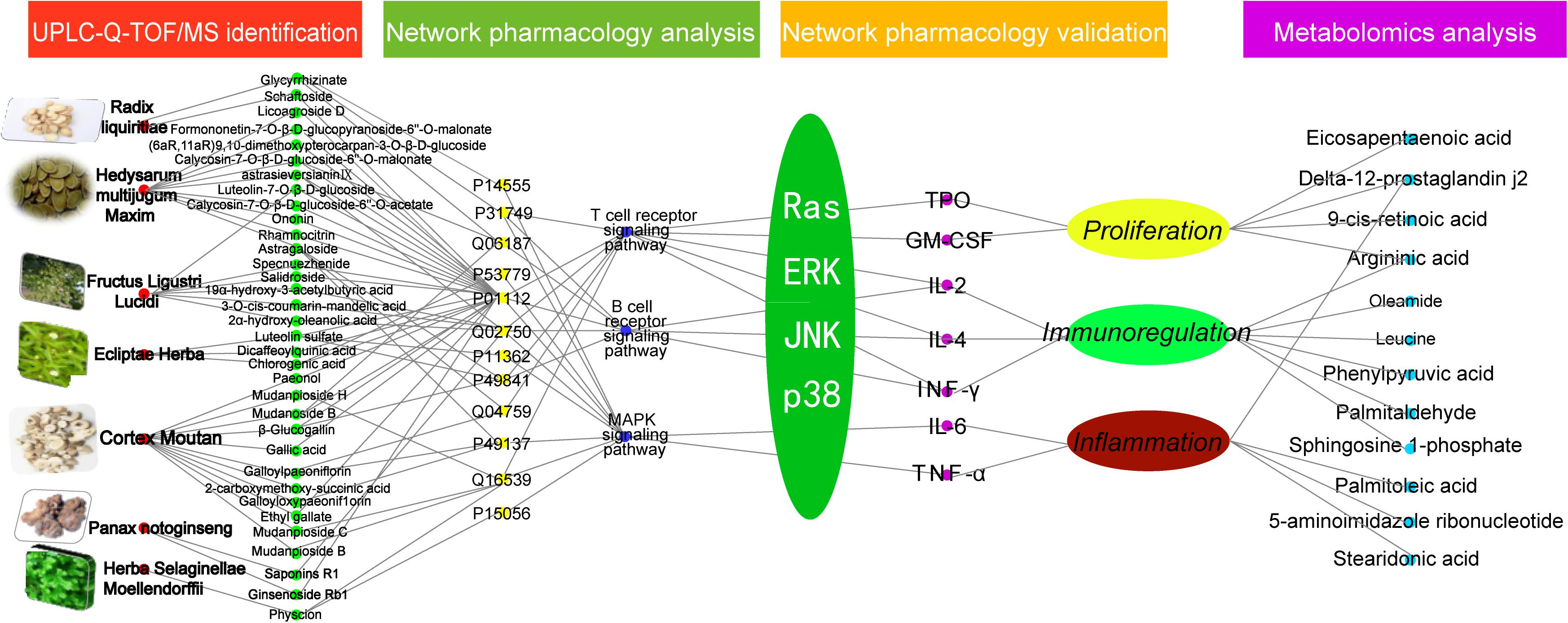 Frontiers | Integrated Network Pharmacology and Metabolomics