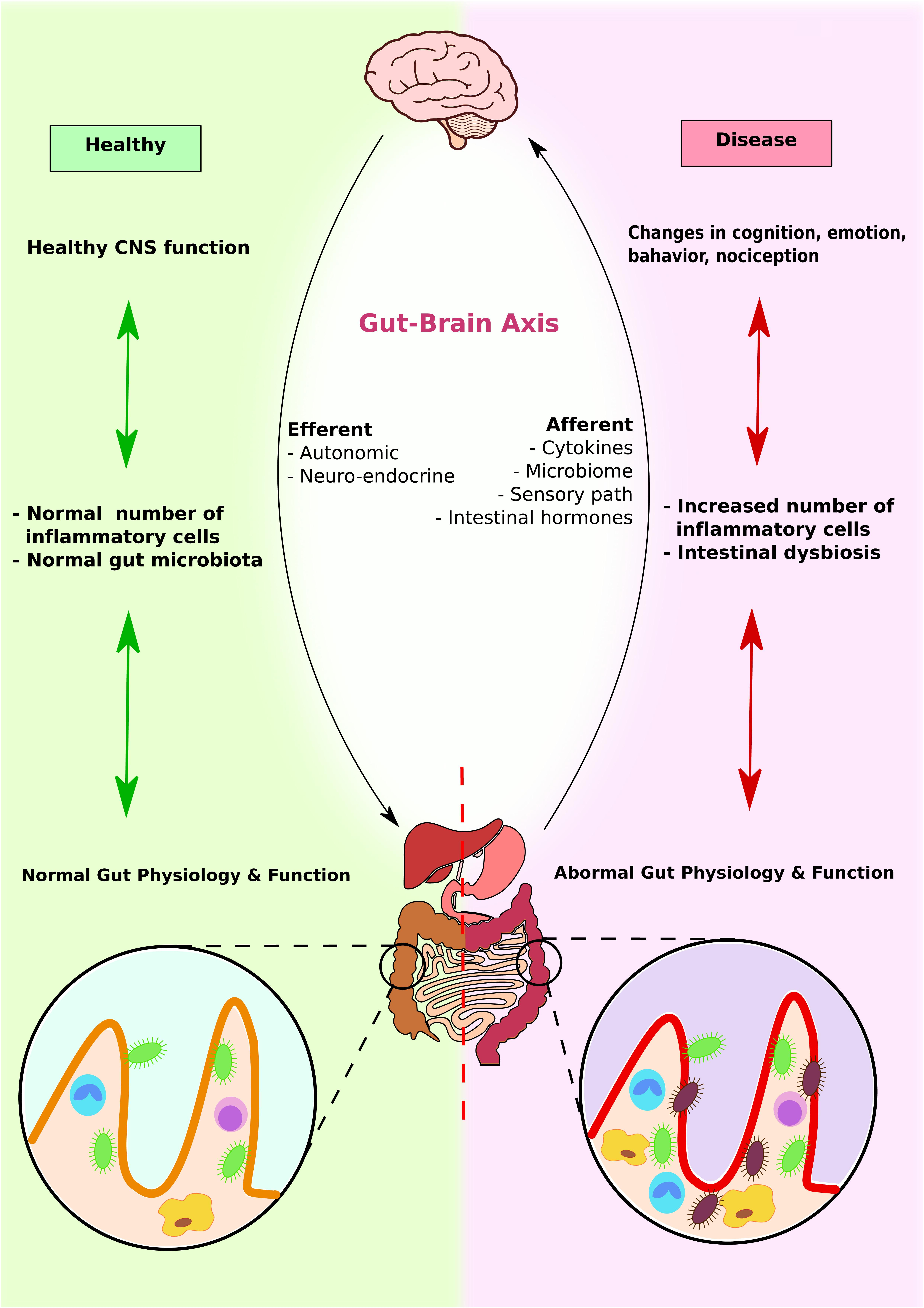 perspectives on lung endothelial barrier function bittar edward patterson c e