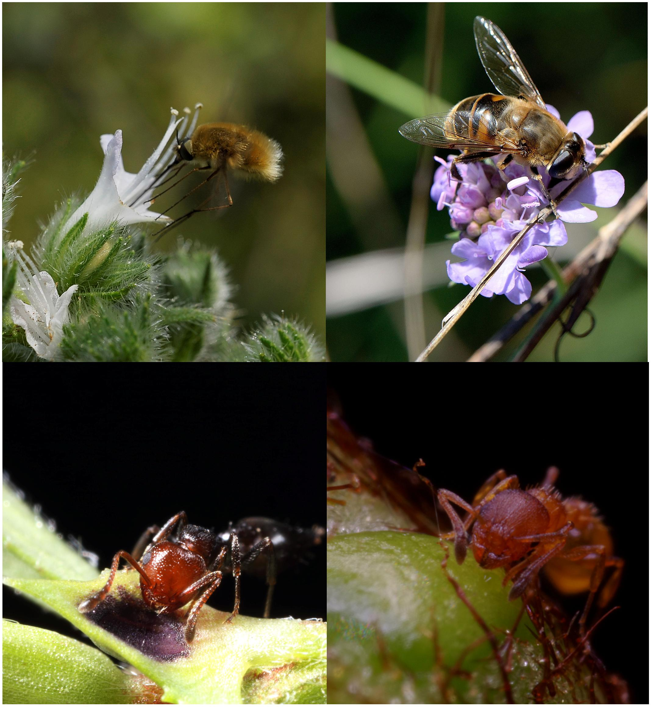 19cf3806c Frontiers | Nectar in Plant–Insect Mutualistic Relationships: From ...