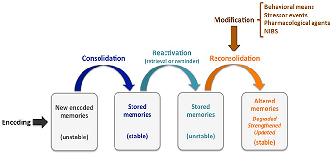 Motor learning through memory reconsolidation