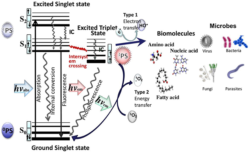 Frontiers | Antimicrobial Photodynamic Therapy to Control