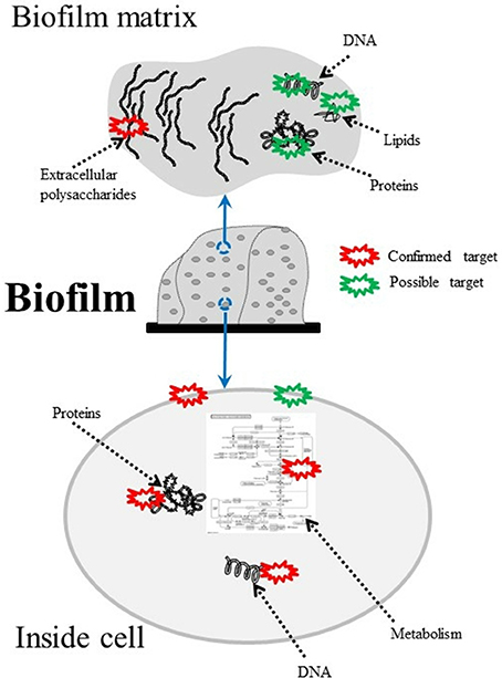 Frontiers   Antimicrobial Photodynamic Therapy to Control