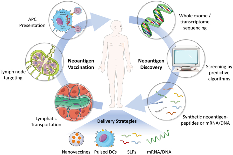 Frontiers | Neoantigen Vaccine Delivery for Personalized