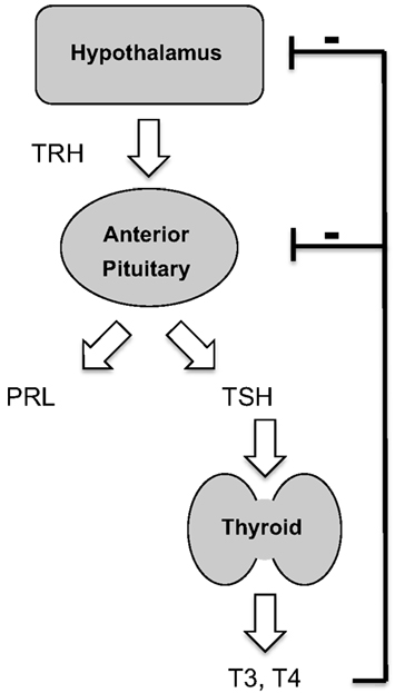 the hormone receptors for a non steroid hormones are located in the