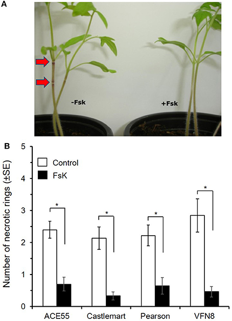 Frontiers Tomato Inoculation With The Endophytic Strain Fusarium