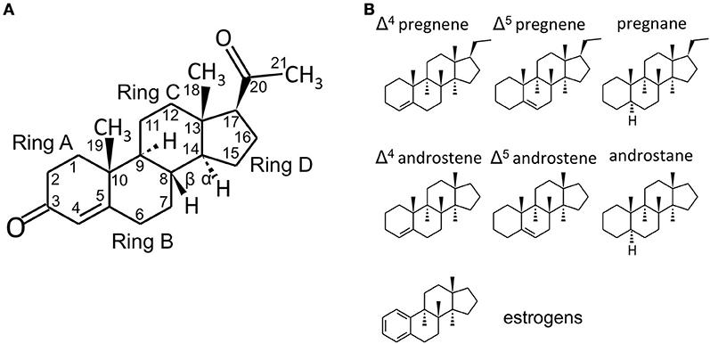 Frontiers   Intracrine Regulation of Estrogen and Other Sex