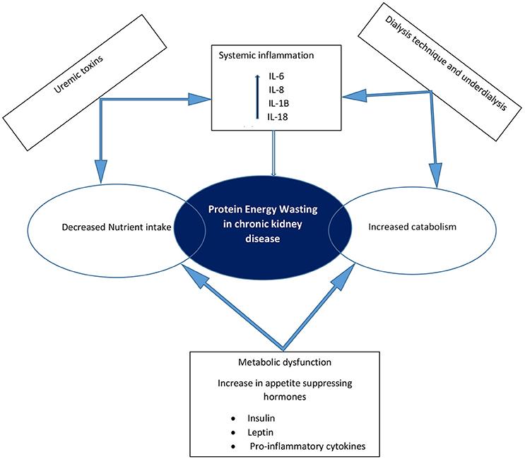 Frontiers Malnutrition In Chronic Kidney Disease Pediatrics