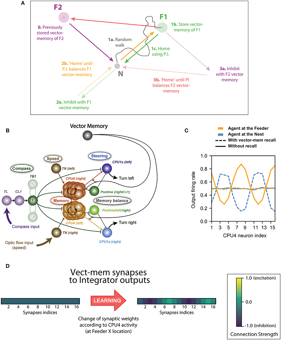 Frontiers | The Central Complex as a Potential Substrate for Vector