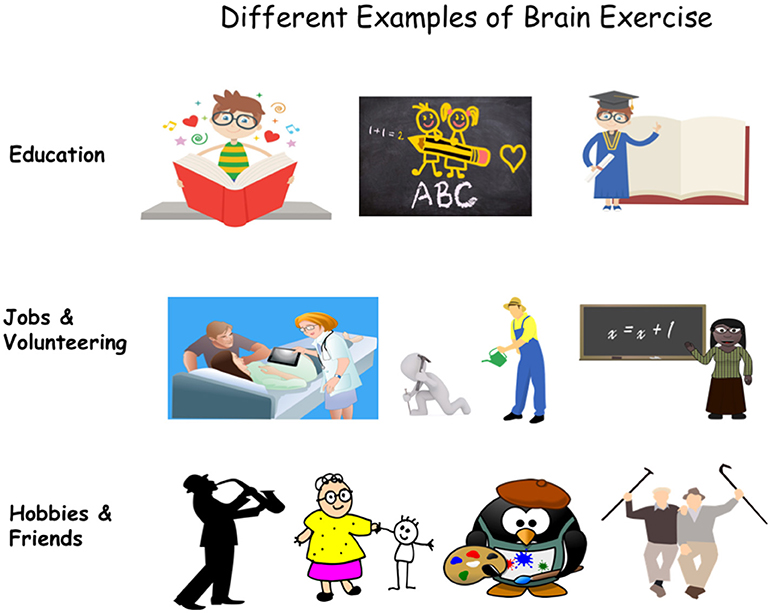 Figure 1 - Different types of brain exercise may help protect against Alzheimer's disease.