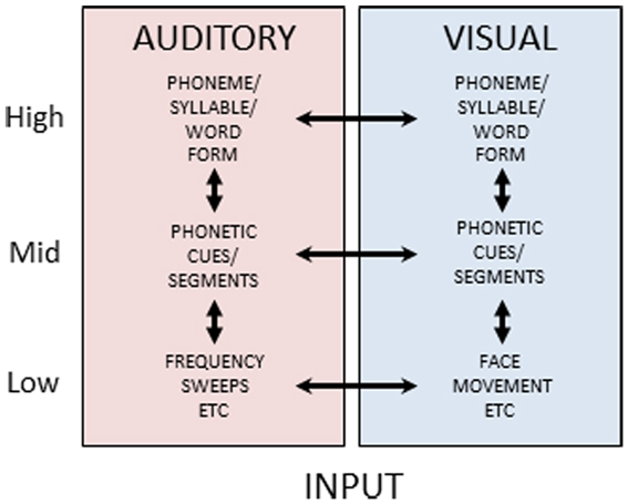 Frontiers : Auditory Perceptual Learning for Speech ...