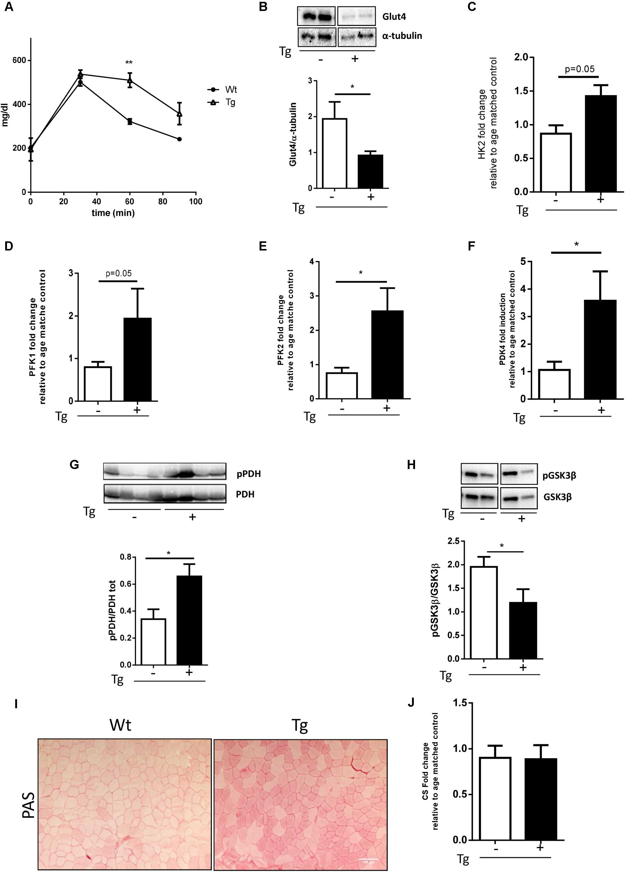 Frontiers Metabolic Changes Associated With Muscle Expression Of Mlc Light Controller Wiring Diagram