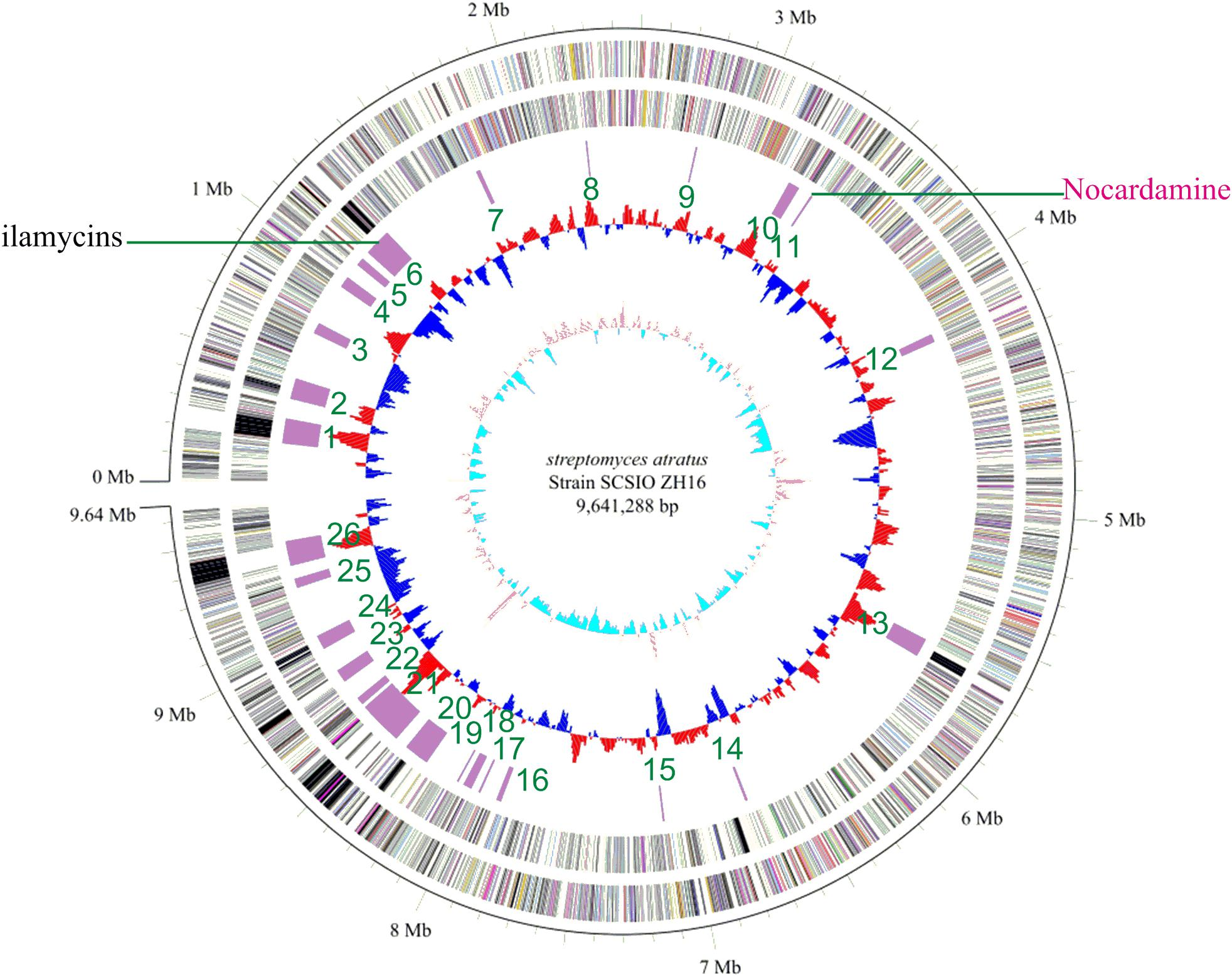 Its Genome Was Sequenced Last Year But >> Frontiers Genome Sequencing Of Streptomyces Atratus Scsiozh16 And