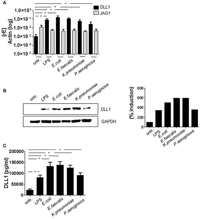 Frontiers | The Interplay of Notch Signaling and STAT3 in