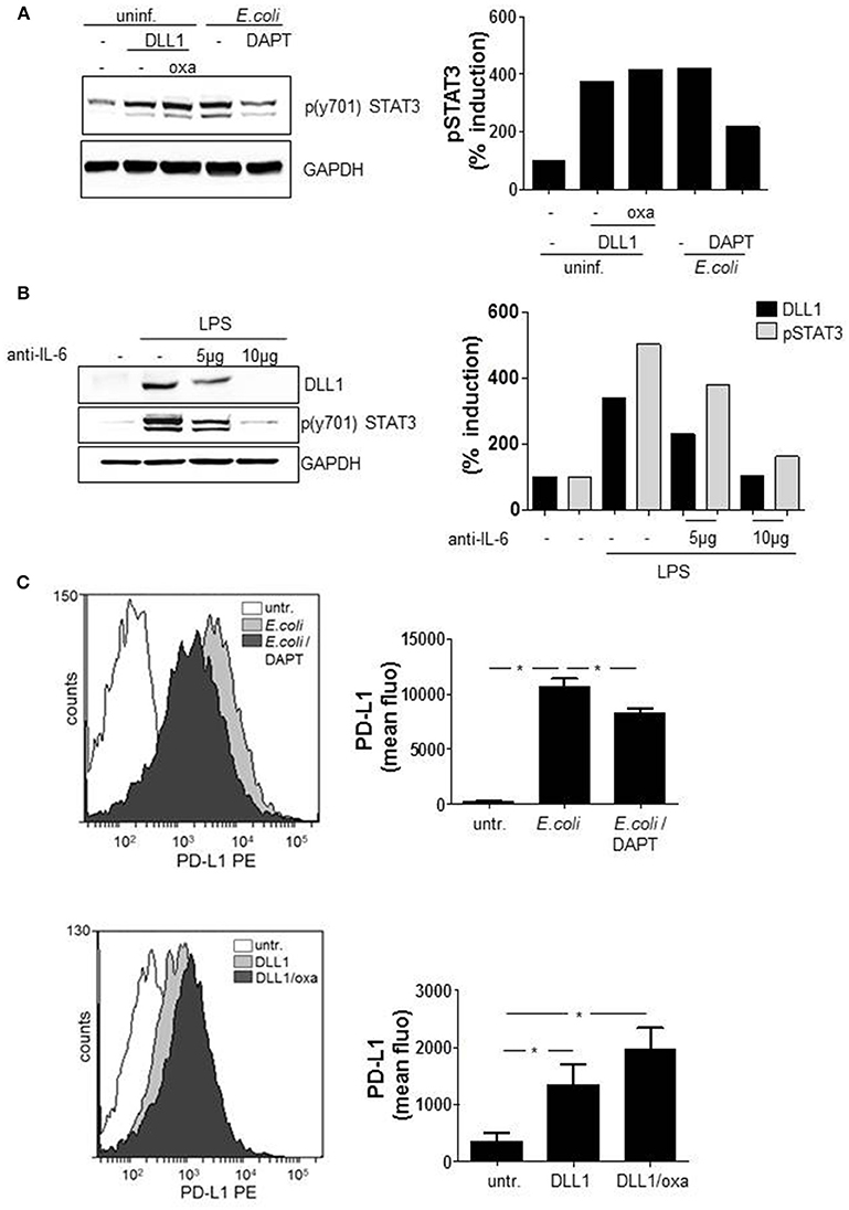 Frontiers   The Interplay of Notch Signaling and STAT3 in