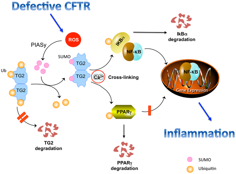 Frontiers Targeting The Intracellular Environment In Cystic