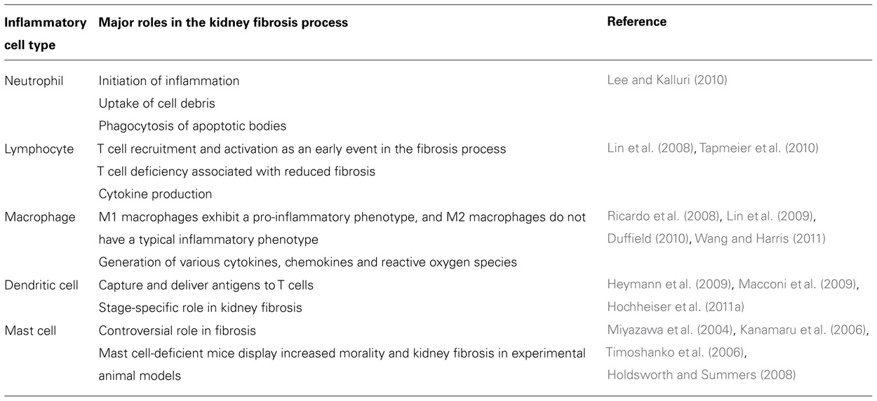 Frontiers Diabetic Nephropathy The Role Of Inflammation In