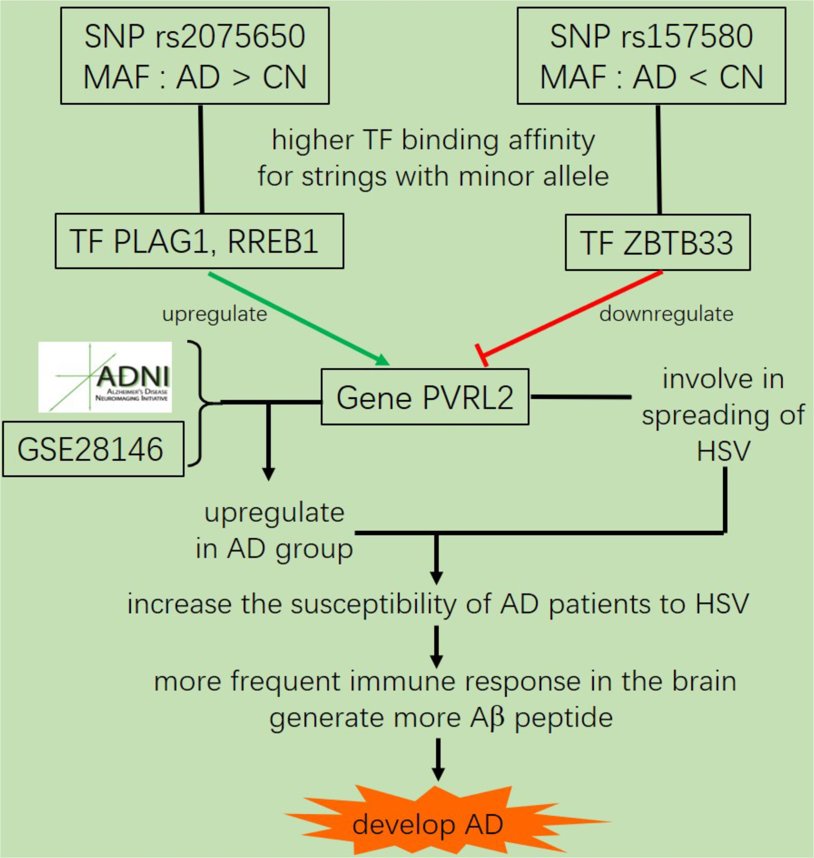 Frontiers | Genome-Wide Association and Mechanistic Studies