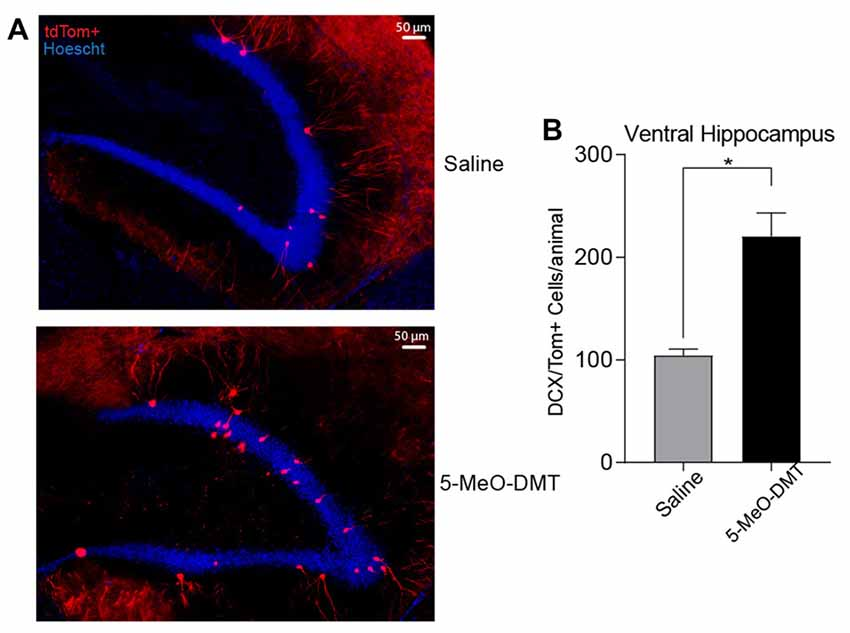 Frontiers | A Single Dose of 5-MeO-DMT Stimulates Cell