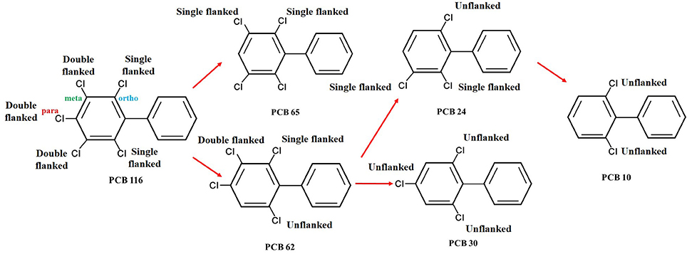 Frontiers | Remediation of Polychlorinated Biphenyls (PCBs
