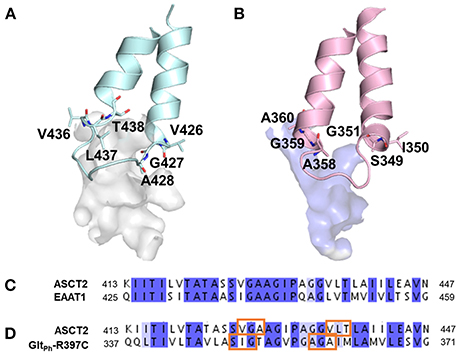 Frontiers | Homology Modeling Informs Ligand Discovery for the