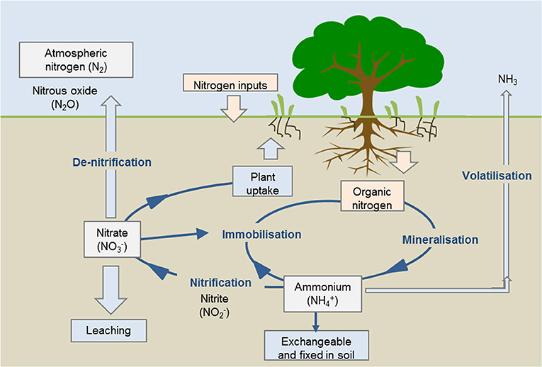 Figure 3 - Stages of the nitrogen cycle.