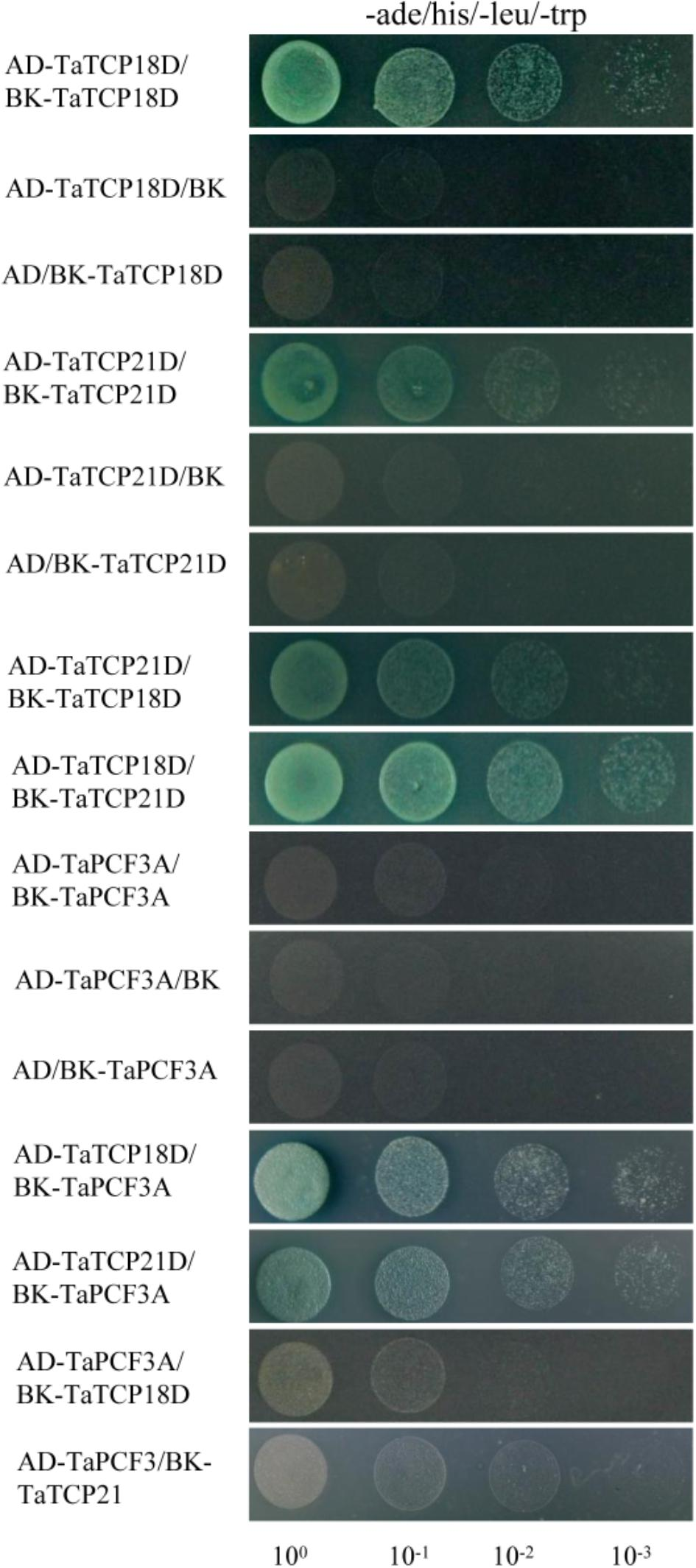Frontiers | Genome-Wide Identification and Expression