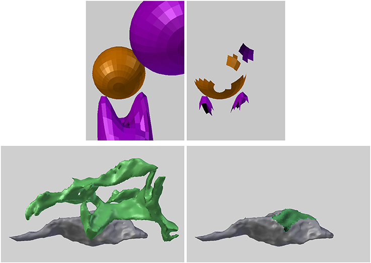 Frontiers   NeuroMorph: A Software Toolset for 3D Analysis