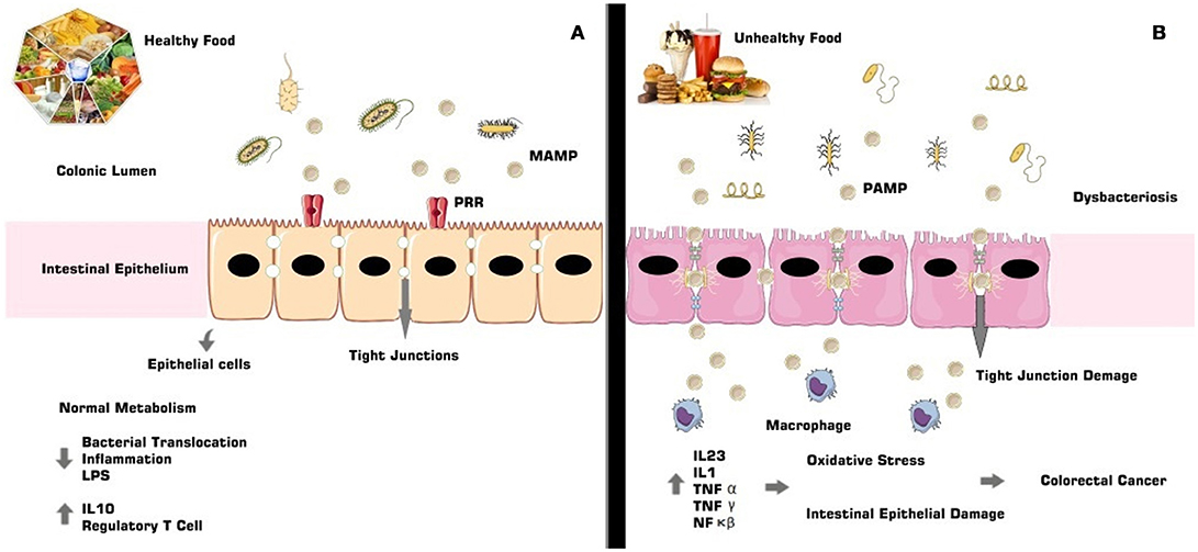 Frontiers The Complex Puzzle Of Interactions Among Functional Food Gut Microbiota And Colorectal Cancer Oncology