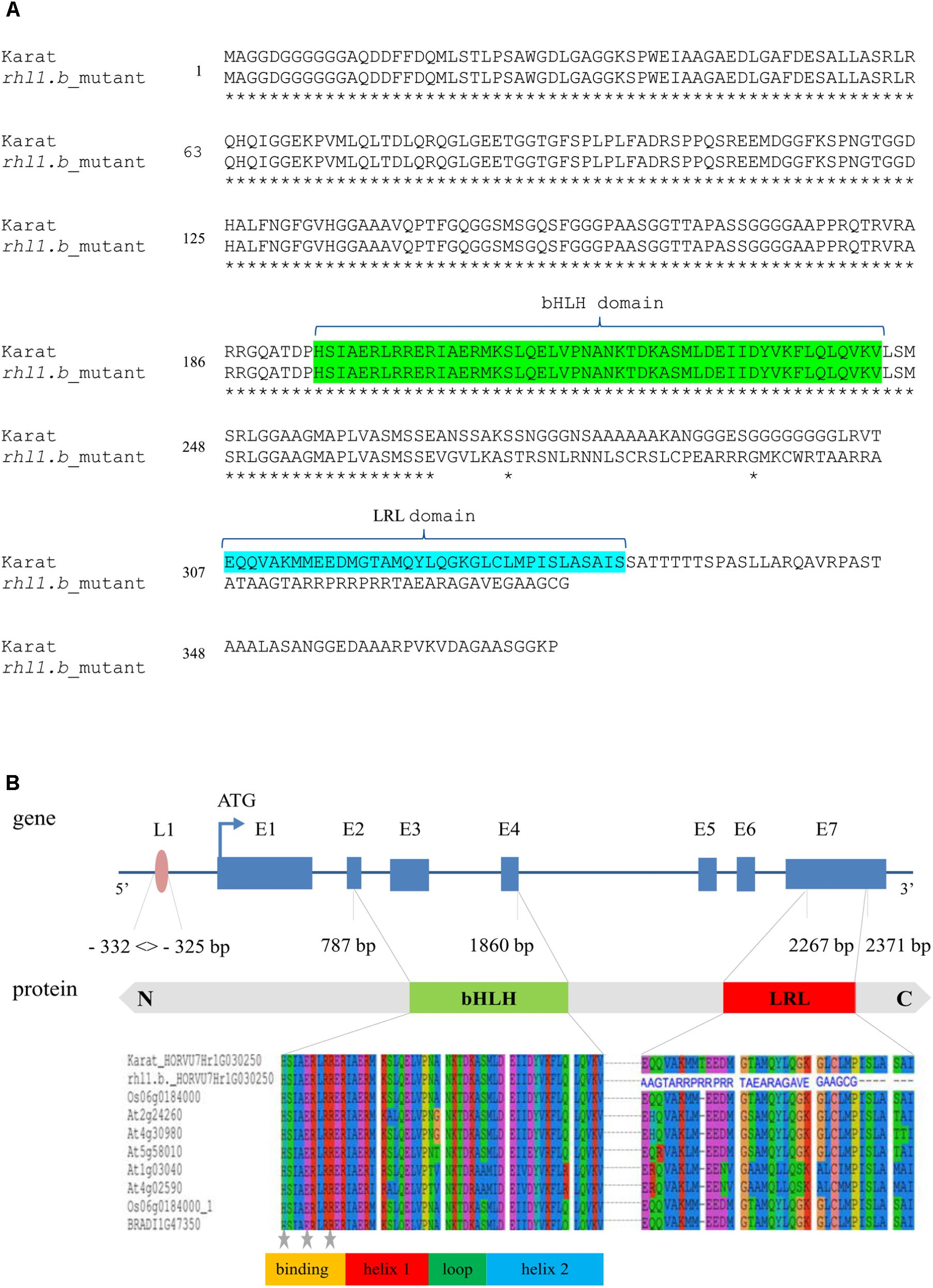 Frontiers | Forward Genetics Approach Reveals a Mutation in
