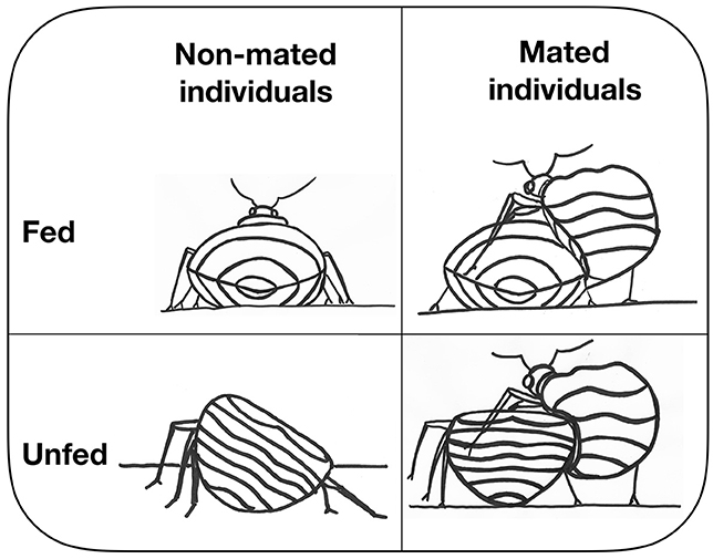 Figure 3 - A representation of the study design with the four groups of females from which we collected bacteria.