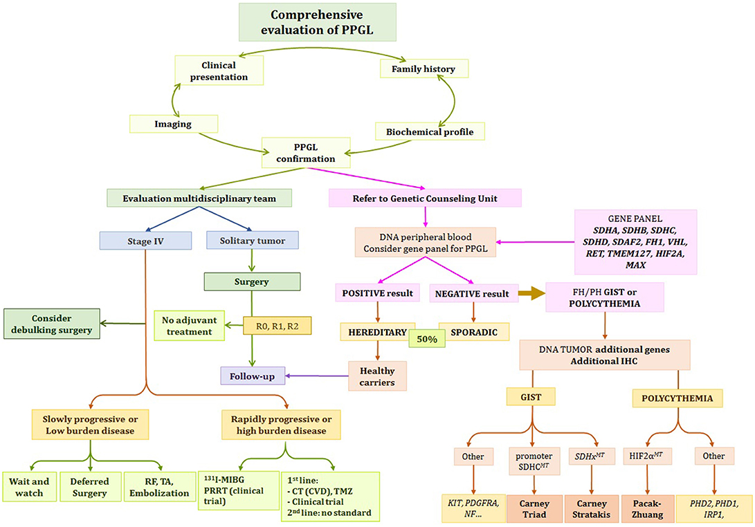 Frontiers | Update of Pheochromocytoma Syndromes: Genetics
