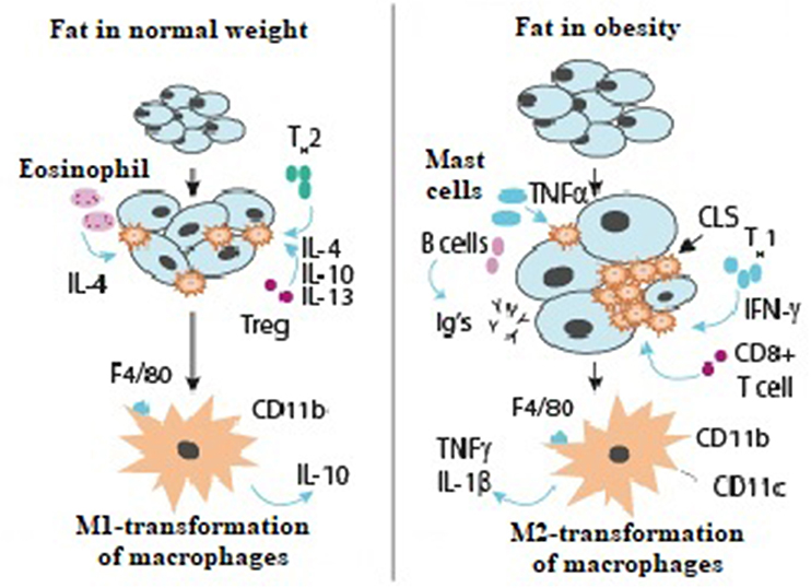Frontiers | Vitamin D Insufficiency in Overweight and Obese