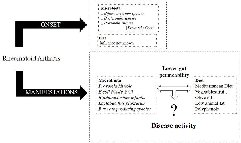 Frontiers Diet Microbiota And Gut Permeability The Unknown Triad In Rheumatoid Arthritis Medicine