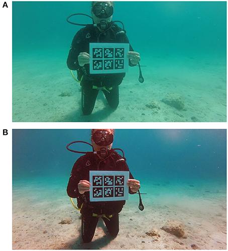 Frontiers | Impact of Dehazing on Underwater Marker