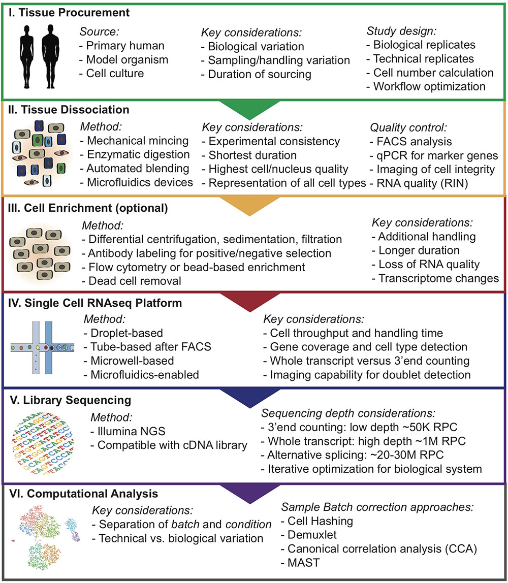 Frontiers | Experimental Considerations for Single-Cell RNA