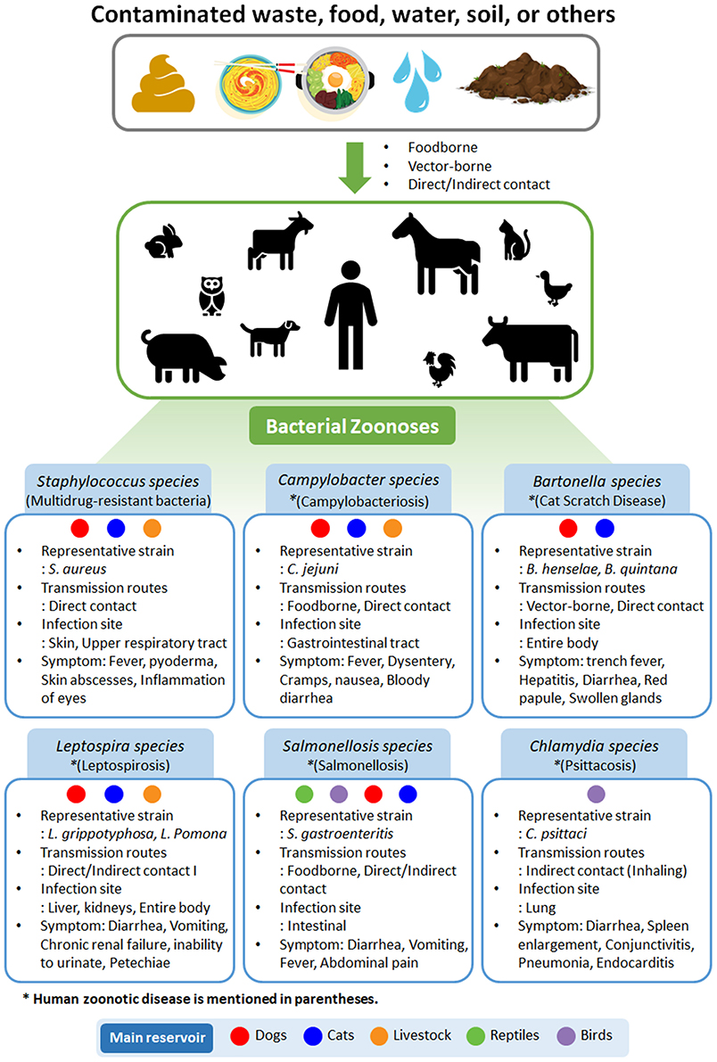 Frontiers | Zoonotic Diseases and Phytochemical Medicines